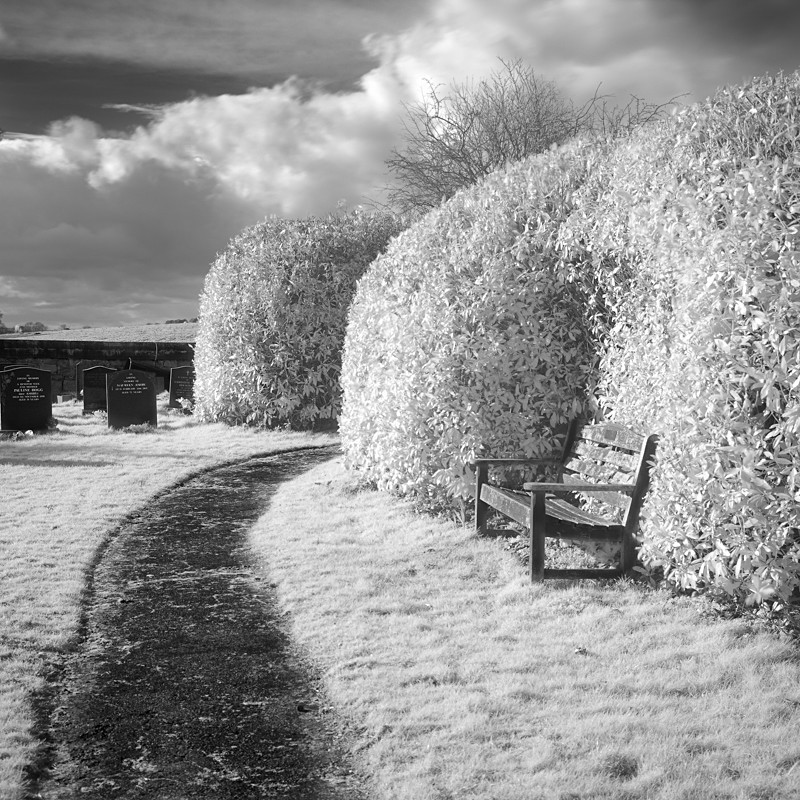Resting Place, Infrared (square format) - Infrared