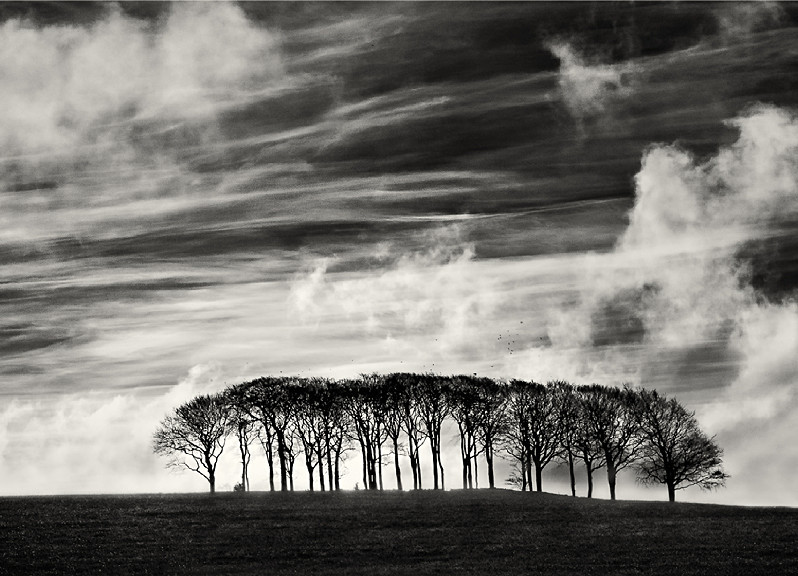 Group of trees photographed in black and white