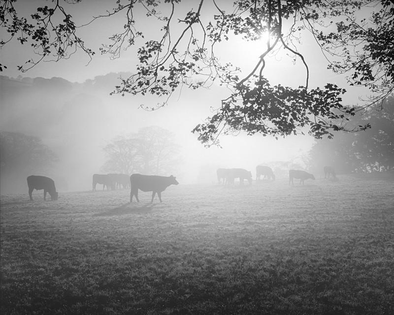 Morning Mist - Landscapes