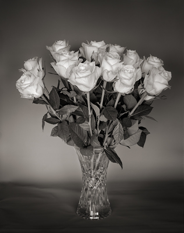 Vase of Roses Black and White Still Life - Abstract & Still Life