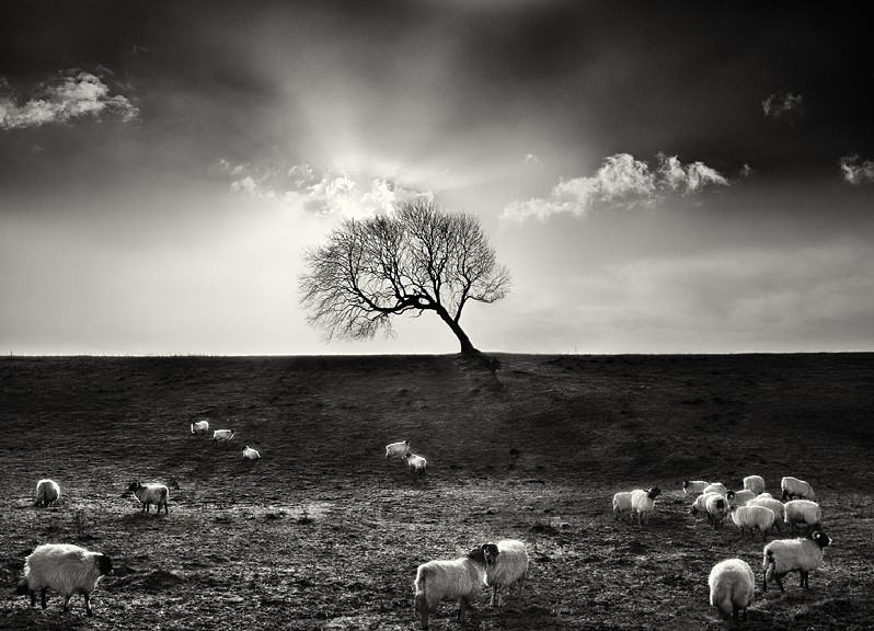 Fine Art Black and White Photography