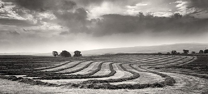 Harvest Pano - Panoramic