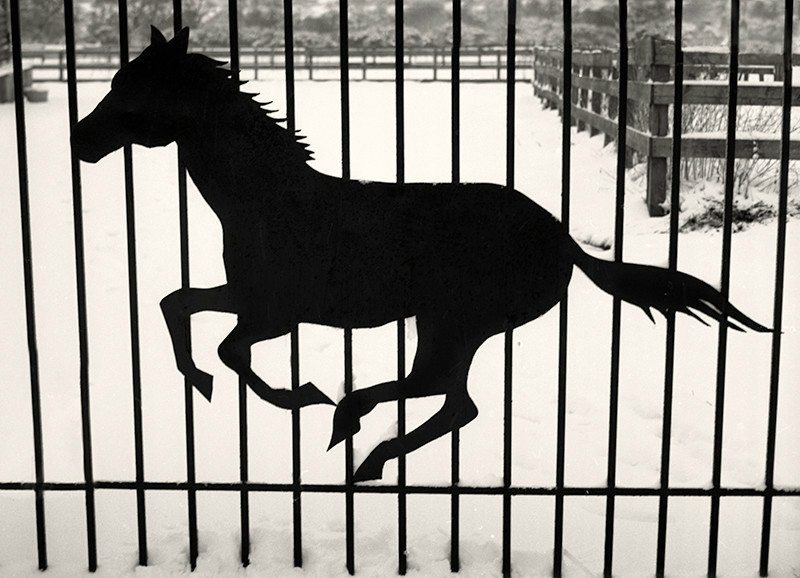Metal Gate and Horse Abstract in Black and White - Abstract & Still Life