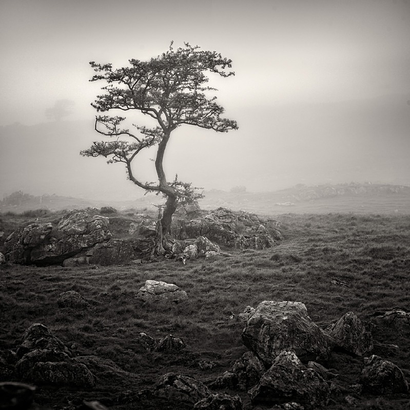 Mist Trees