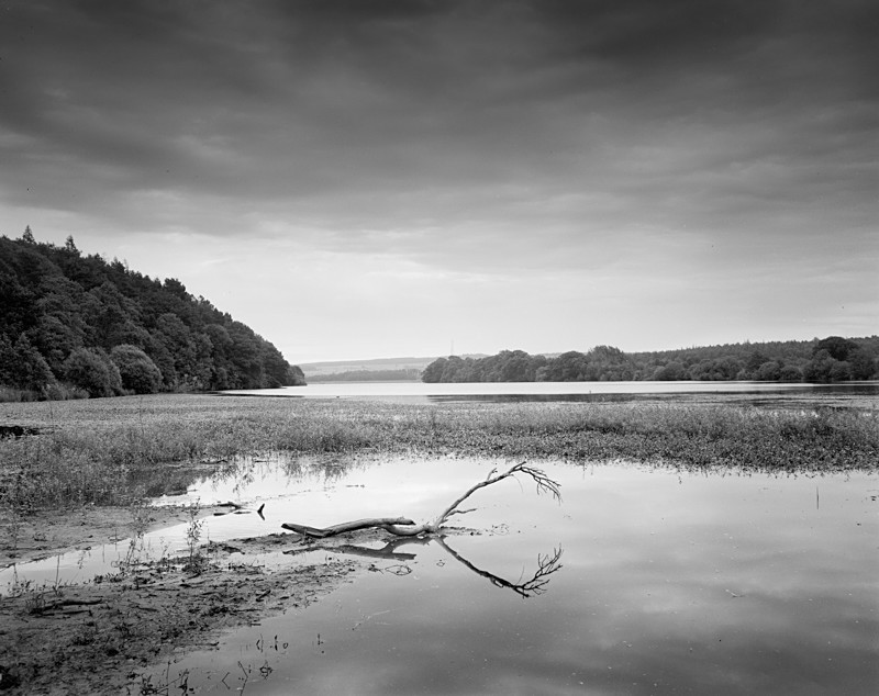 Dead Wood Fewston Reservoir - Landscapes