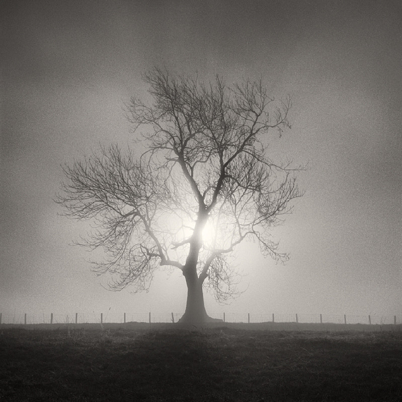 Tree and Light (square format) - Landscapes