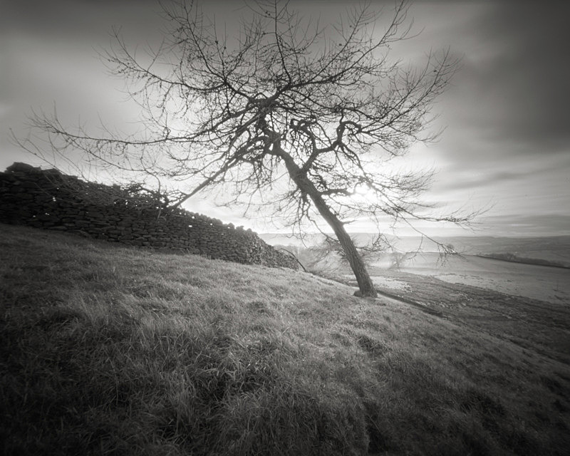 Prevailing Wind, Beamsley - Trees, Fields and Landscapes
