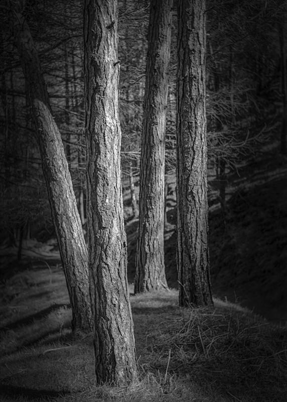 Four Pines, Ilkley - Landscapes