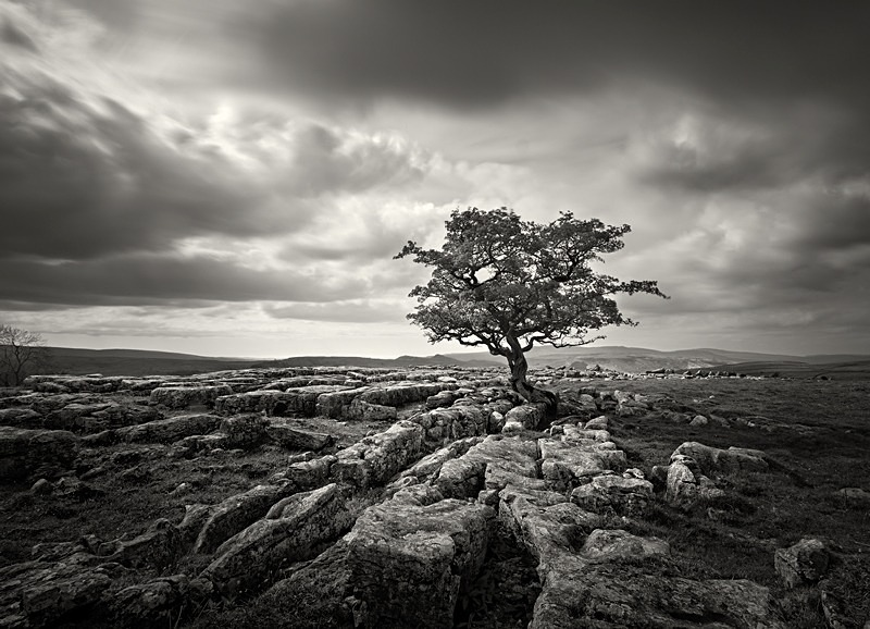 Tree and Limestone Grit