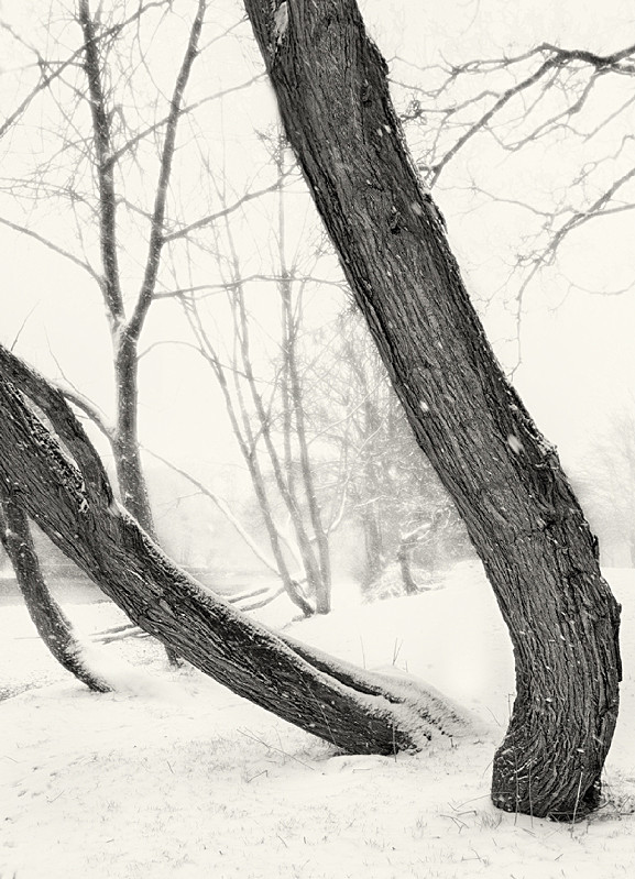 Trees in Winter Ilkley in Black and White - Abstract & Still Life