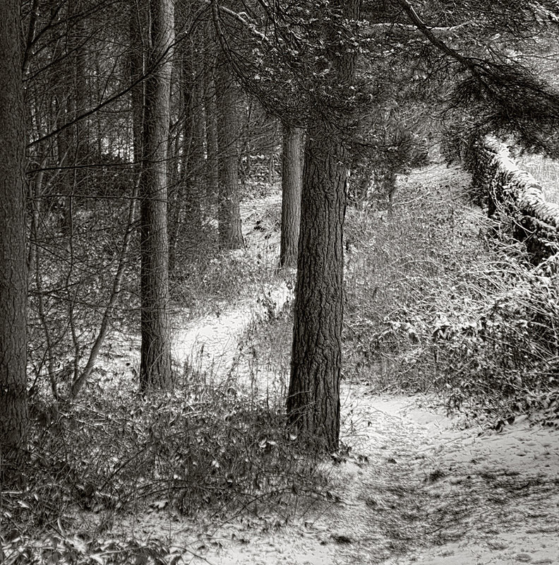 Woodland Path in Winter (square format) - Landscapes