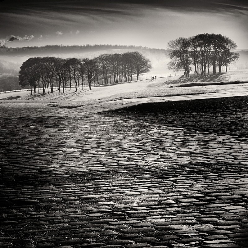 Yorkshire Cobbles and Trees