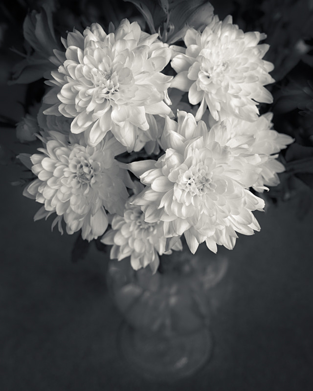 Vase of Flowers Still Life in Black and White - Abstract & Still Life