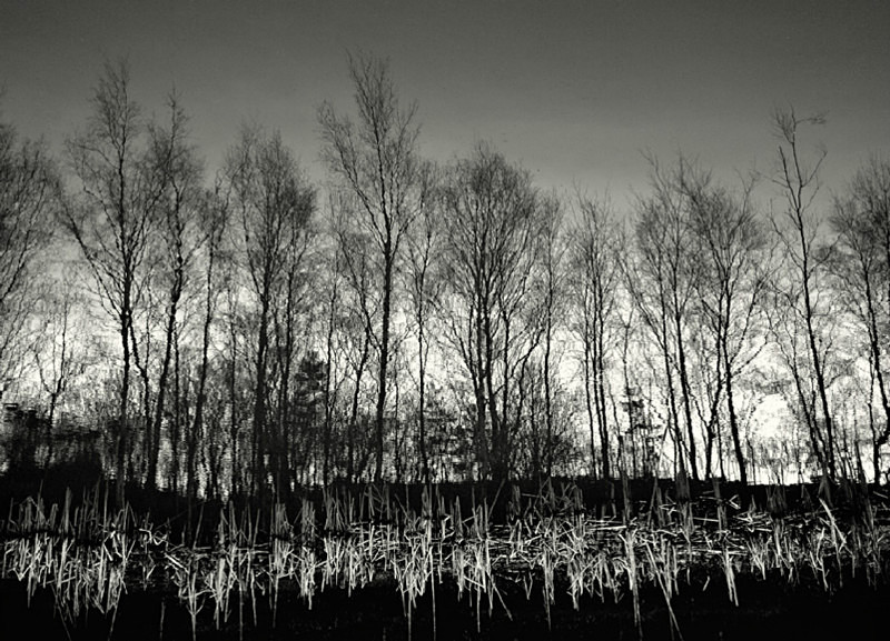 Tree Reflection in Black & White - Abstract & Still Life