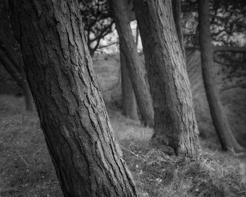 Tree Abstract - Landscapes