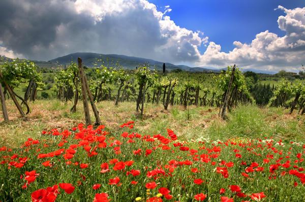 Chiantiscape - Tuscany