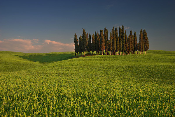 Tuscan Beauty - Tuscany