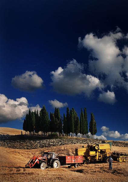 The harvest - Tuscany
