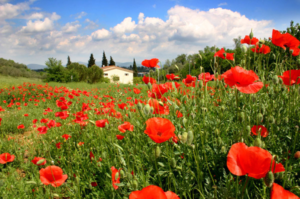 May in Tuscany - Tuscany
