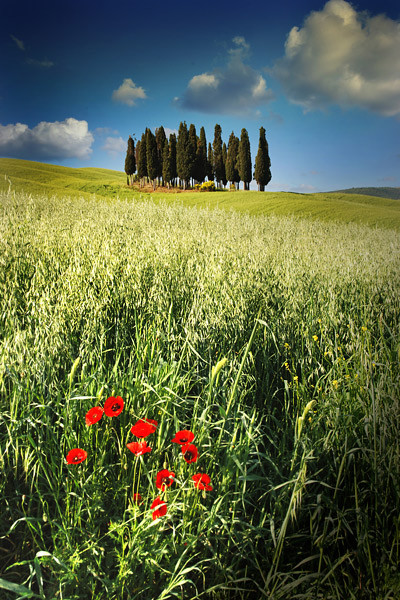Tuscan Candles - Tuscany