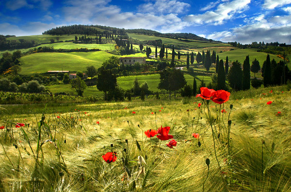 Tuscanyshire - Tuscany