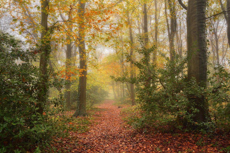 z2561 Autumn Mist, Combley Great Wood Havenstreet - East Cowes to Ryde inc Haventstreet, Ashey