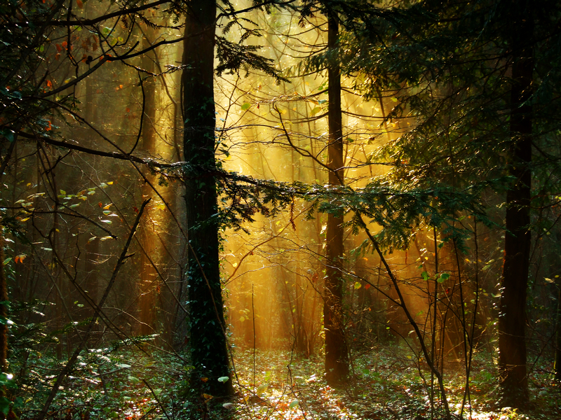 807 Shafts of Sunlight,  Firestone Copse - East Cowes to Ryde inc Haventstreet, Ashey