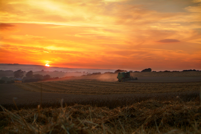 603 Evening Harvest - Sandown, Shanklin, Luccombe and Wroxall
