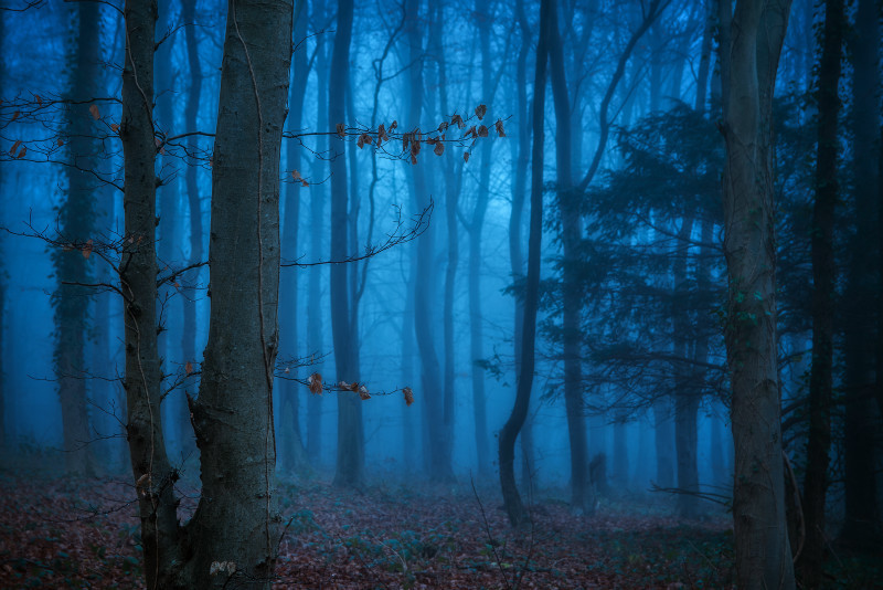z3210 Misty Dusk Brighstone Forest - Latest Photos