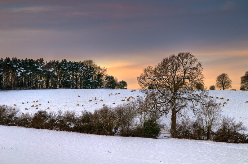 z1741 Evening Snowfields Near Havenstreet - East Cowes to Ryde inc Haventstreet, Ashey