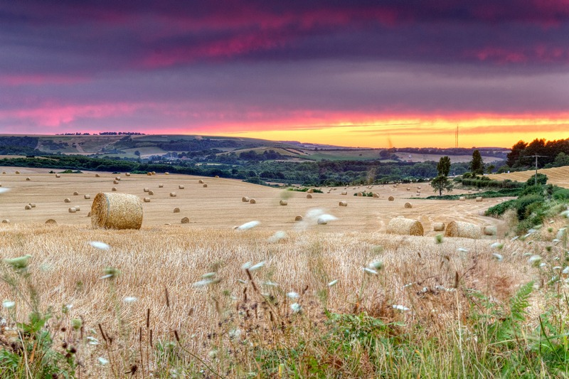z2466 Bales at Sunset, Blackwater - The Inner Island inc Newport & Godshill