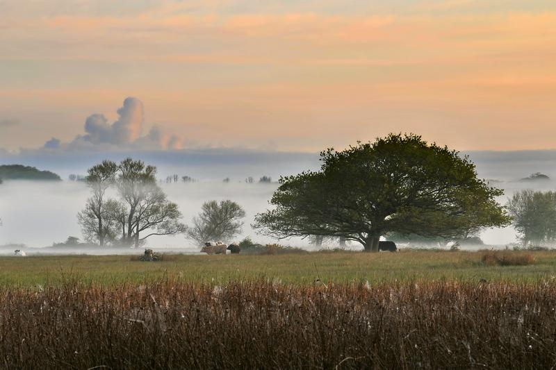 z1330 Morning Mist, Brading Marshes - Seaview to Bembridge, Whitecliff Bay and Brading