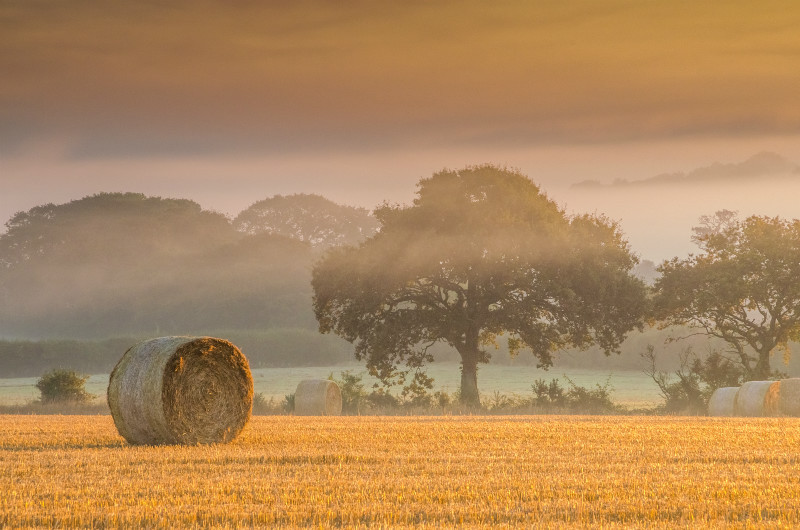 z3149 Misty Bales Porchfield - Latest Photos