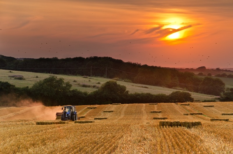 z2255 Evening Harvest, Arreton - The Inner Island inc Newport & Godshill