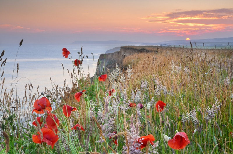 z2330 Evening Poppies, Atherfield - Blackgang to Compton inc West Wight