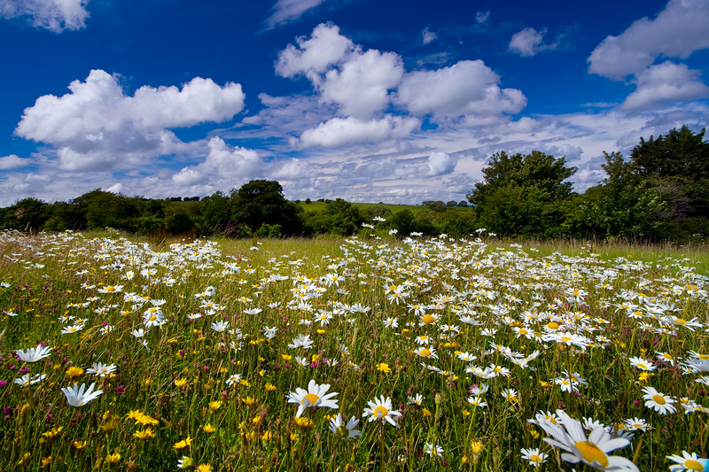 z1014 An English Meadow, Knighton - The Inner Island inc Newport & Godshill