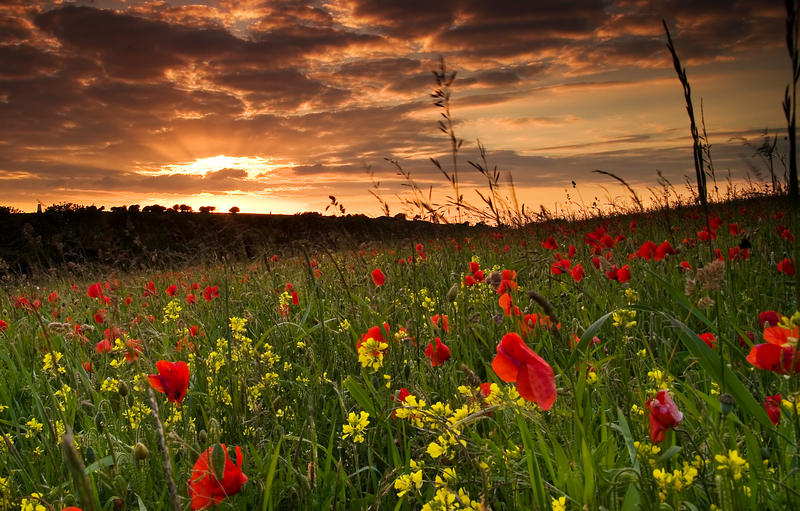 z1008 Poppies, Nunwell Down - The Inner Island inc Newport & Godshill