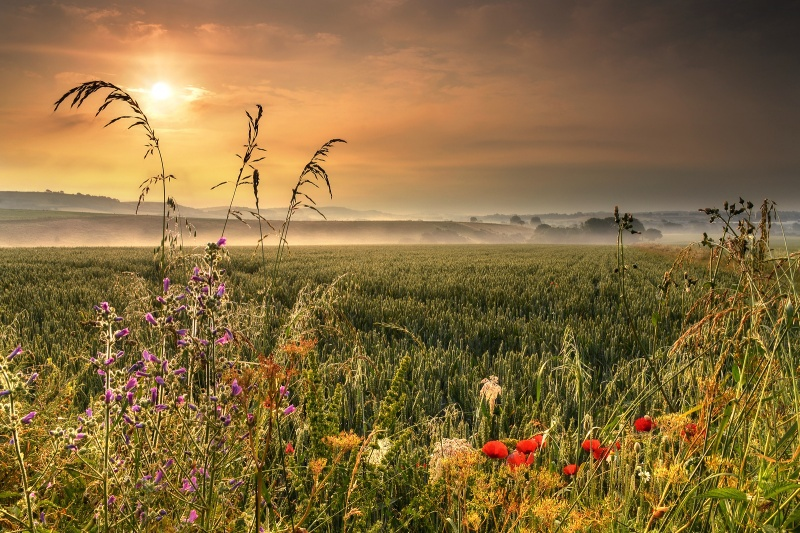 z2210 Morning Mist, Arreton - The Inner Island inc Newport & Godshill