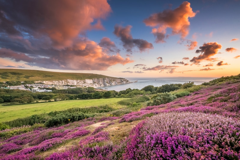 z2951 Heather at Sunset overlooking Alum Bay and the Needles - Freshwater Bay to Colwell Bay