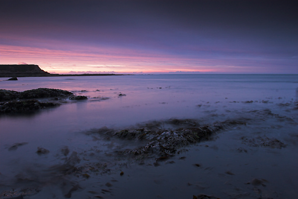 Purple, Berwick - Northumberland