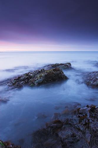 Seaweed, North Sea - Northumberland