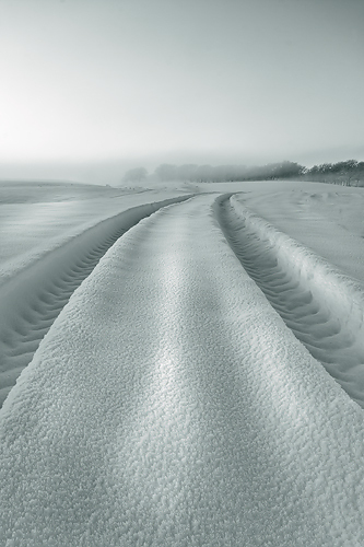 Snow Tracks - Monochrome