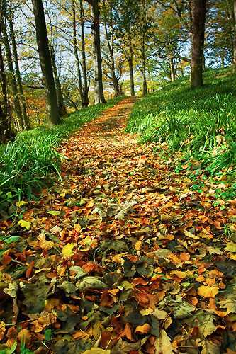 Autumn Walk - UK Scenery