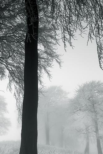 Frozen Mist - UK Scenery