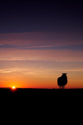 Winters Sunset - UK Scenery