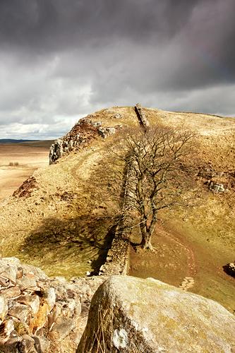 Sycamore Gap, Hadrian's Wall - Northumberland
