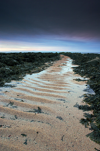 Path to the Sea, Berwick - Northumberland