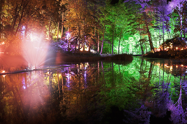 The Enchanted Forest - UK Scenery