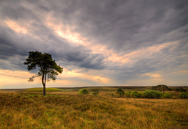 Wide Open Plains - Dorset and Hampshire