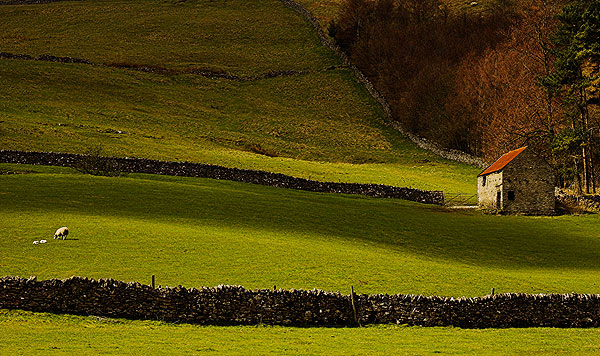 Nursery Fields - Landscapes
